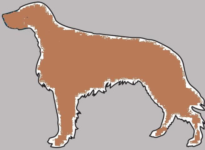 Sintomas Podem Salvar  Seu Cão .Sinais capa