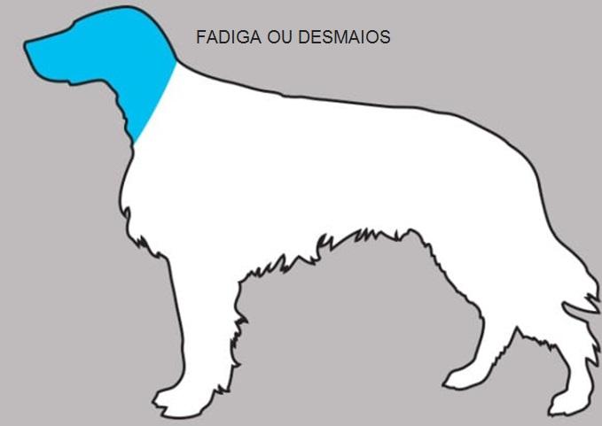 Sintomas Podem Salvar  Seu Cão -  Sinais fadiga