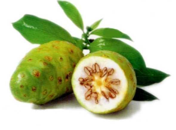fruta noni beneficio c