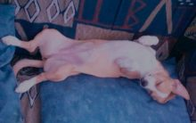 Cachorros Que Arranham a Própria Cama – Causas