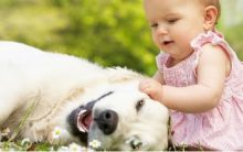 Raças de Cachorros Para Famílias – Dicas