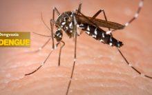 Vacina Contra Dengue – Disponível no Brasil