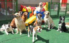 Creche Para Cães – Como Escolher