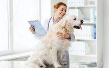 Animal de Estimação No Veterinário – Quando Levar