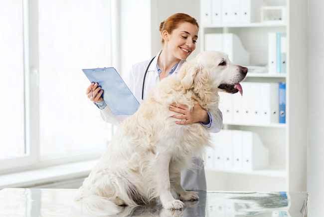 animal-de-estimacao-no-veterinario-quando-levar