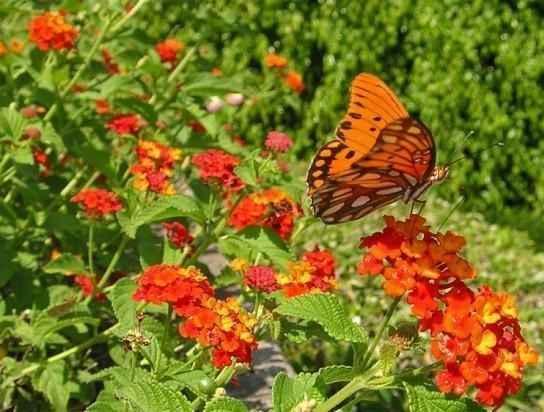 borboletas-no-jardim-cambara