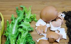 Adubo Orgânico – Como Preparar