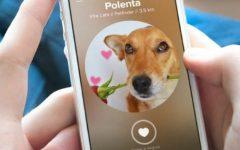Cuidados Com Cães – Aplicativos