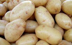 Plantar Batatas Em Casa – Como Fazer e Vídeo