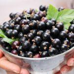 Óleo de Groselha Negra – Benefícios