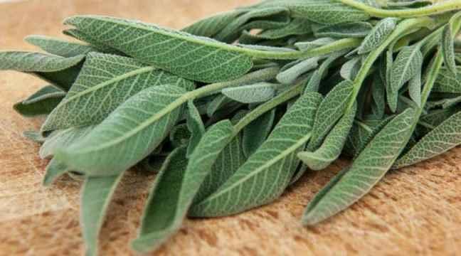 Planta s lvia propriedades e benef cios - Vitaminas para plantas de interior ...