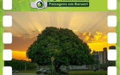 Concurso de Fotografia Ambiental Em Barueri – Inscrições