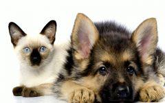 Castração de Cães e Gatos – Como Inscrever Gratuitamente