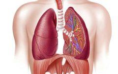 Doença Pulmonar DPOC – Causas