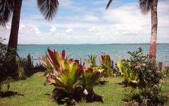 Plantas Na Casa de Praia – Como Escolher