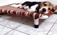 Caminha de PVC PET – Material e Vídeo