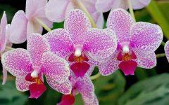 Curso de Cultivo Orquídeas Em São Paulo – Como Participar