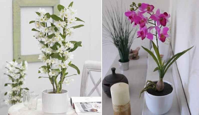 Orqu dea bambu como plantar em vaso e fazer muda for Bambu in vaso prezzo