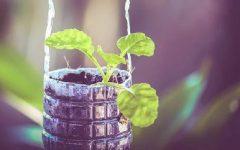 Vaso de Muda Com Garrafa Pet – Materiais e Como Fazer